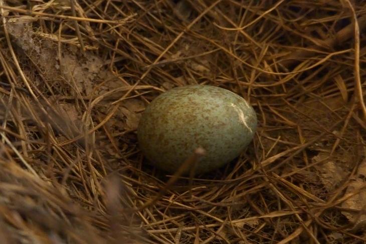 """Am Morgen des 3. Mai liegt im Nest das 1. Ei - aber mittlerweile bin ich mir nicht mehr so sicher, ob das nicht schon am Nachmittag des 2. Mai nach meiner """"Erstbeschau"""" gelegt wurde."""