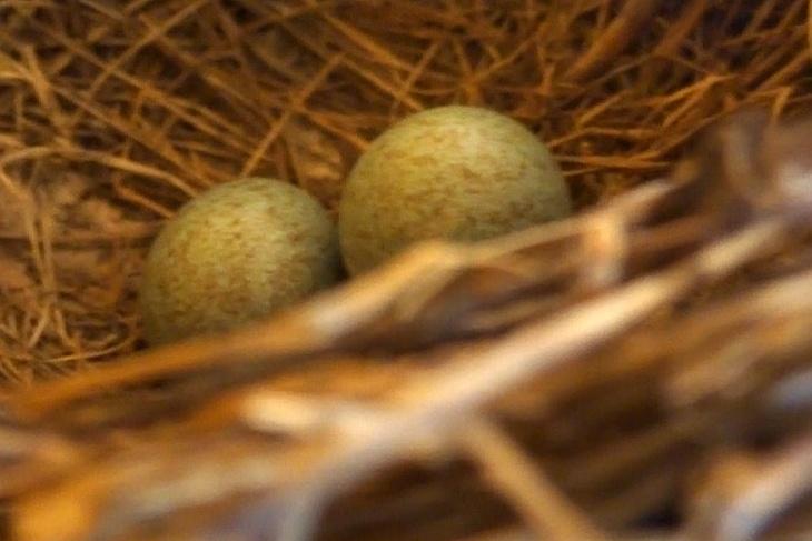Am Nachmittag des 3. Mai - da ist schon Ei Nummer 2. Wenn das so weiter geht, werd ich mir morgen wohl Pflegeurlaub nehmen müssen.