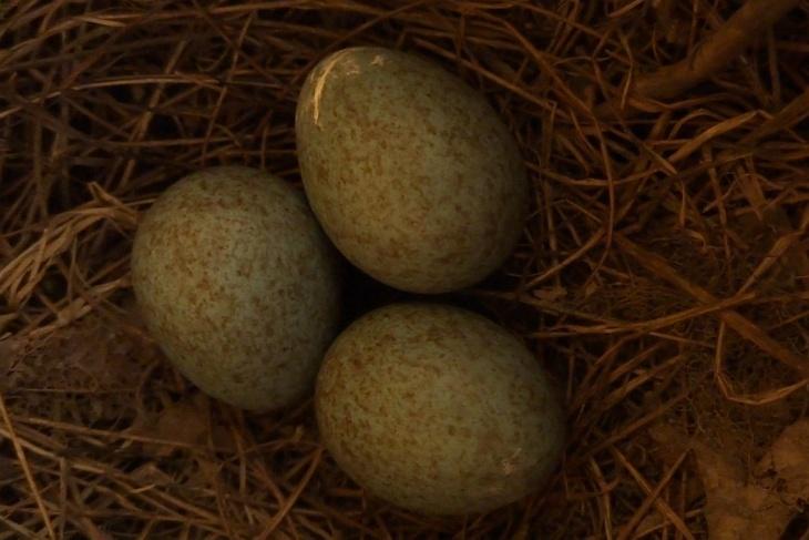Am Nachmittag des 4. Mai da waren es schon der Eier DREI