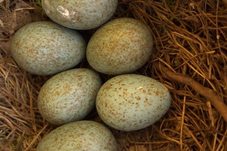 07.05.2020 - 15:00 Uhr: Überraschung - es ist noch ein 6. Ei hinzugekommen.