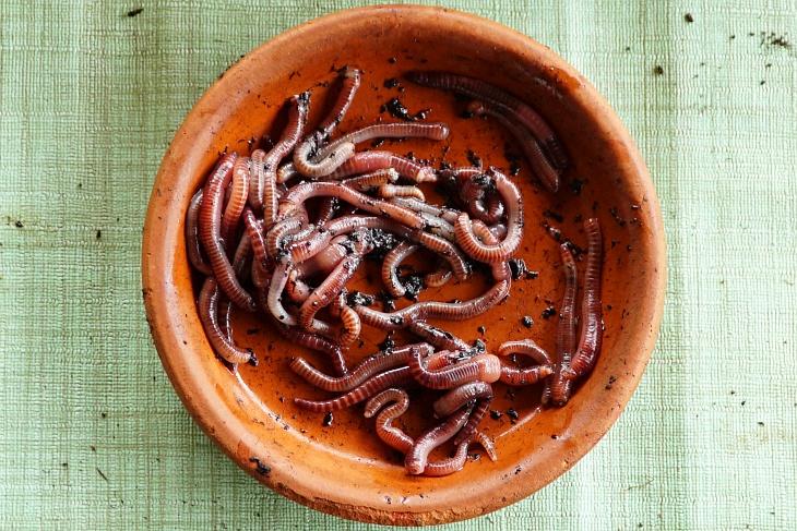 31.05.2020: Insgesamt 108 Riesen-Rotwürmer-Geschnetzeltes habe ich den Amseln heute kredenzt.