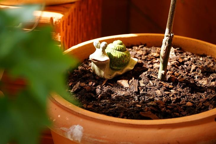 03.06.2020: Auch Gwendolyn ist erstaunt, über die Ruhe, die nun im Nest herrscht.