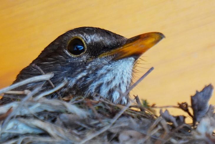 Nicht immer sitzt Eilin so munter im Nest ...