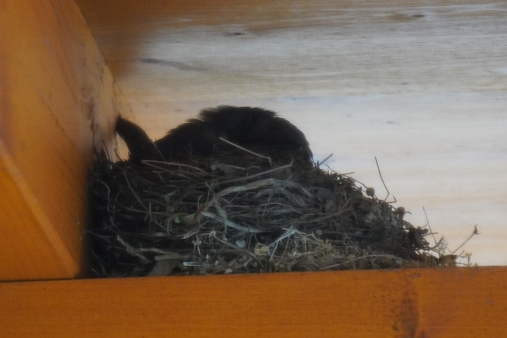 Und manchmal vergräbt sie ihr Köpfchen überhaupt ganz im Nest.