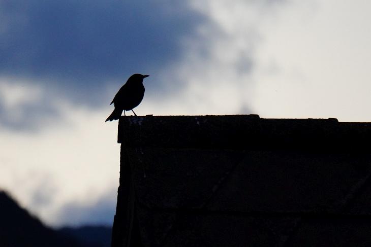 ... oder in der Abenddämmerung, wenn bereits die Fledermäuse flattern.