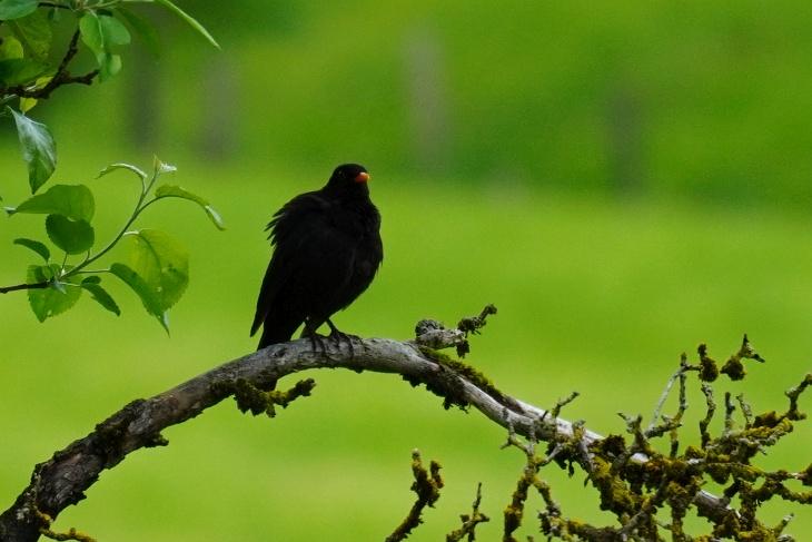 ... oder im Süden, wo er mit Katharina jetzt ein Nest hat.