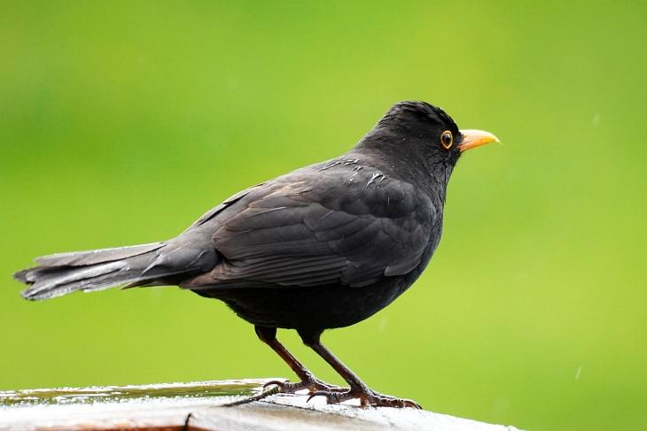 Anfangs dachte ich, Theoderich würde Eilin sogar bis zum Nest verfolgen, ihr auf der Terrasse nachstellen ...