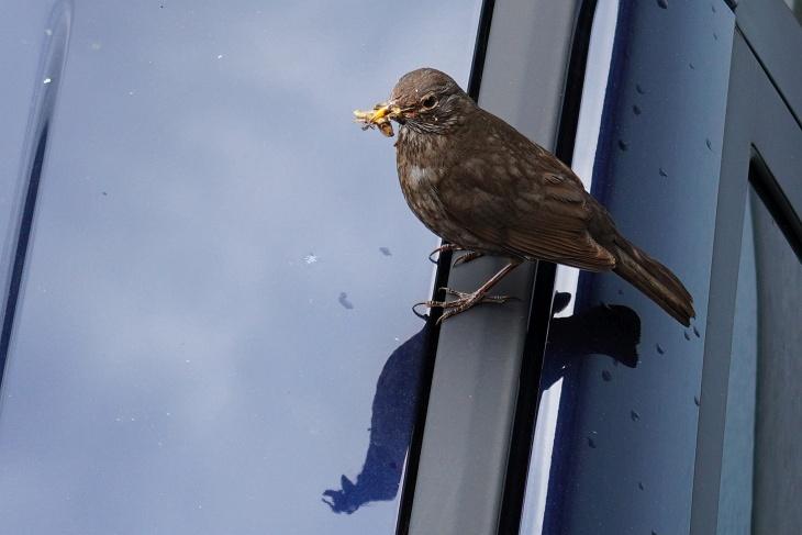 Eilin nutzt neuerdings auch gerne mein Auto als Startbasis für den Anflug ins Nest.