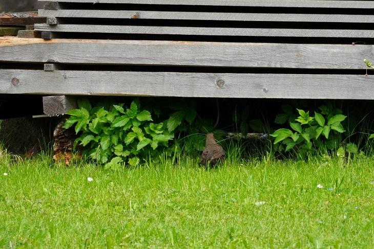 ... wo er von Eilin zunächst vermutlich unter diesem Holzstoß versteckt wird.