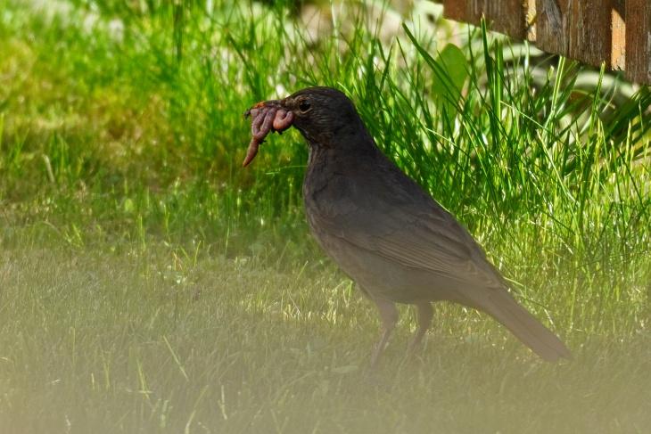 Nach dem ersten aufregenden Ausflugstag gibt es im Nest 2 Schnäbel weniger zu füttern.