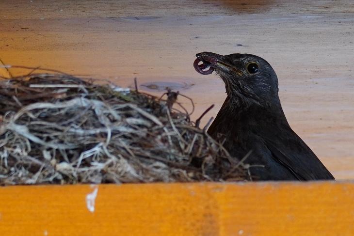 ... zur kleinen Ylvie im Nest.