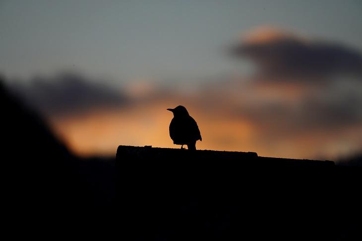 1. Juni: Eilin scheint sich am Ende des Tages zufrieden auszuruhen, nachdem ihre ersten beiden Küken erfolgreich das Nest verlassen haben.