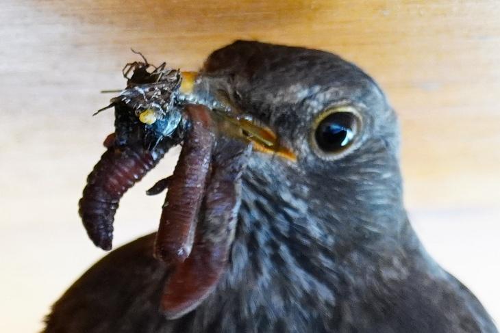 ... oder Wurm garniert mit Spinnenbein.