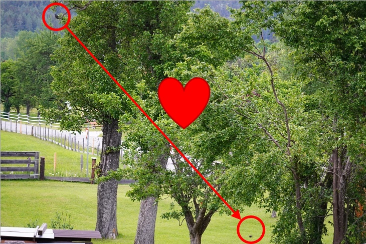 ... oder er beobachtet ihr Tun am Boden aus erhöhter Aussichtsposition. Sei es nun aus Liebe oder aus purer Dominanz und Kontrollwahn.