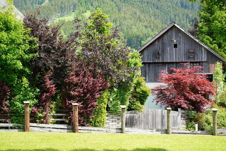 07.06.2020: Heute haben wir herausgefunden, dass Eilin ihre Kinder in diesem Vogelparadies hinter den prachtvoll roten Bäumen versteckt hat.