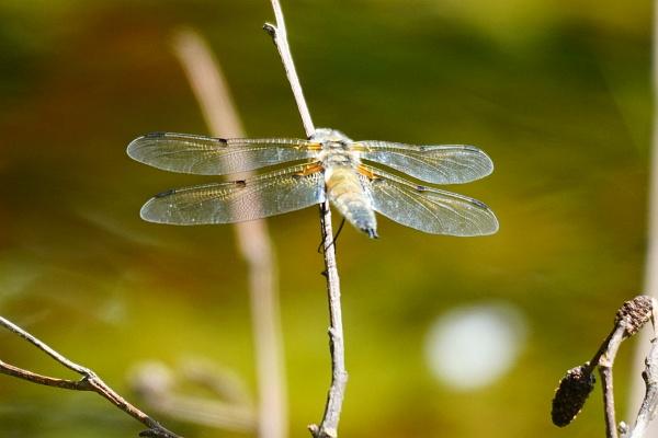 Warum der Libellenteich wohl so heißt?